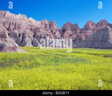 Trèfle jaune pré et formations érodées, Badlands National Park, South Dakota, USA Banque D'Images