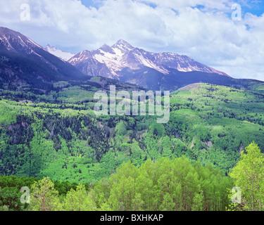 Le mont Wilson, de l'ensoleillement des forêts des États-Unis, de Camping San Juan National Forest, Colorado, USA Banque D'Images