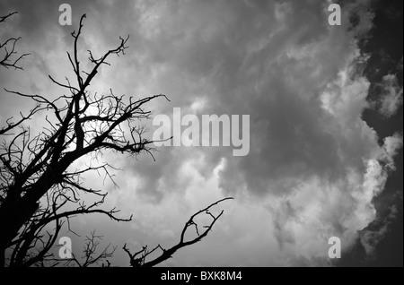 Membres d'un arbre mort qui se profile au-dessous d'un gros nuage noir au-dessus de grade 1, Canyonlands National Banque D'Images