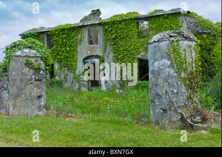 Maison en ruine abandonné dans le besoin de rénovation, couverte de lierre et autres plantes grimpantes en Co Wexford, Banque D'Images