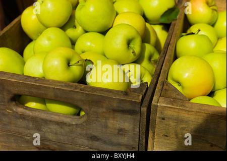 La pomme verte dans la case Banque D'Images