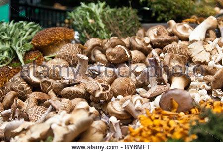 Les champignons sauvages en décrochage sur Borough Market, London, UK. Banque D'Images
