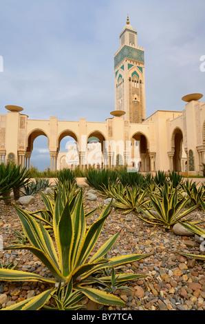 Yuccas dans Rock Garden à Mosquée Hassan II et des mondes plus grand minaret avec l'architecture mauresque à Casablanca Banque D'Images