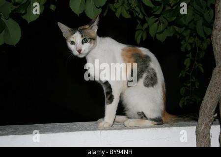 Chat assis sur le mur