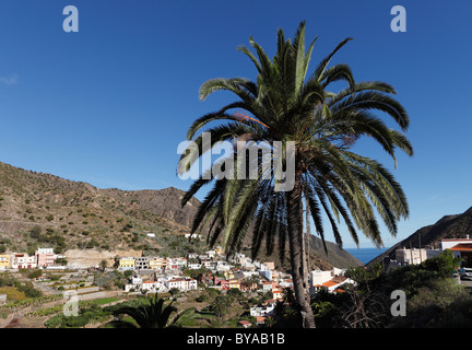 Île des Canaries (Phoenix canariensis), Vallehermoso, La Gomera, Canary Islands, Spain, Europe Banque D'Images