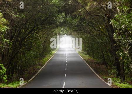 Route à travers une forêt d'arbres laurel, Parc National de Garajonay, île de La Gomera, Canary Islands, Spain, Europe