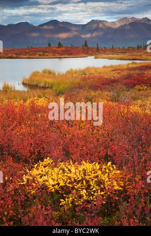 L'Autoroute Denali, en Alaska. Banque D'Images