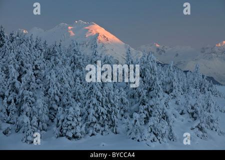 Les arbres dans la neige, Turnagain, la Forêt Nationale de Chugach Alaska. Banque D'Images