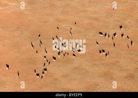 Gemsbok (Oryx gazella). Troupeau dans une plaine de sable au bord du désert du Namib. Vue aérienne