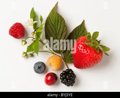Mélange de petits fruits: fraises, framboises rouges et or, de mûre, de bleuet et de cranberry avec feuilles et Banque D'Images