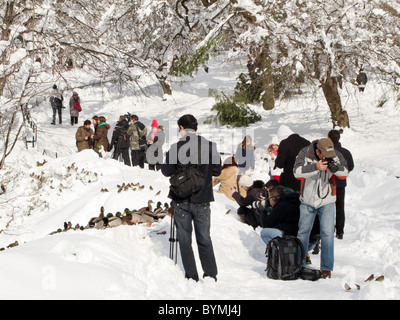 Foule Prise de photos de canards, étang gelé, Central Park, NYC Banque D'Images