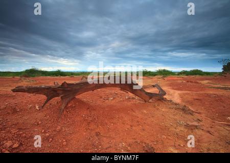 Le sol érodé en Sarigua national park (désert), Herrera province, République du Panama.