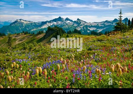 Fleurs sauvages dans la prairie et vue de Tatoosh Range de Skyline Trail au Paradis zone; Mount Rainier National Banque D'Images
