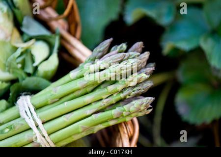 Un bouquet d'asperges dans un panier de légumes frais Banque D'Images