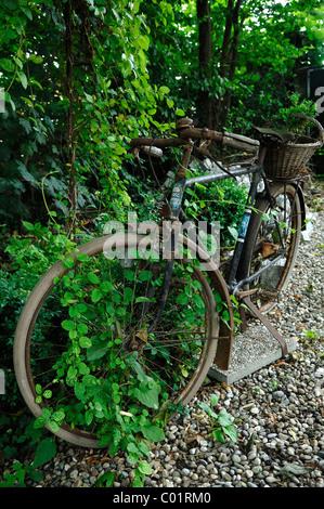 Vieux vélo dans le jardin Banque D\'Images, Photo Stock: 103272534 ...