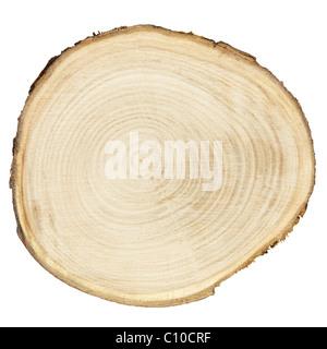 Section transversale du tronc de l'arbre isolé sur blanc Banque D'Images