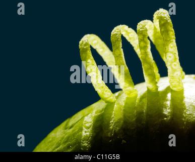 Les boucles de Peel sur une lime, close-up Banque D'Images