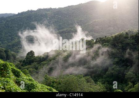 Forêt amazonienne, jungle, brume, la cime des arbres, forêt Banque D'Images