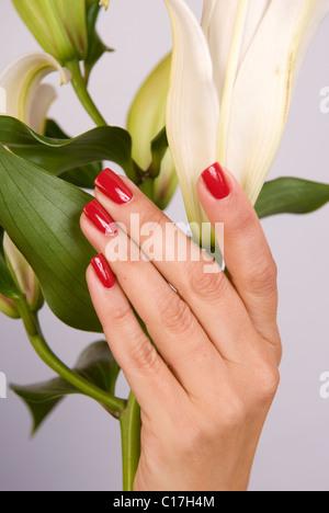 Mains et ongles manucurés holding Lily flower Banque D'Images
