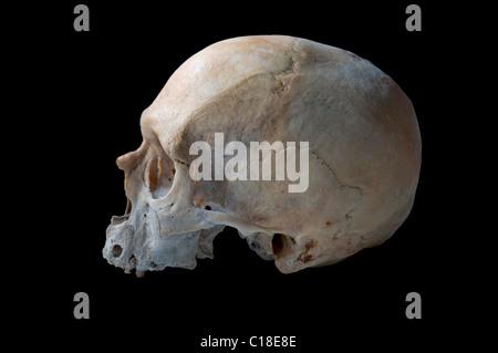 Crâne humain authentique en vue de gauche isolé en fond noir Banque D'Images