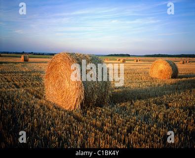 France, Indre et Loire, un paquet de blé qui vient d'être coupé Banque D'Images