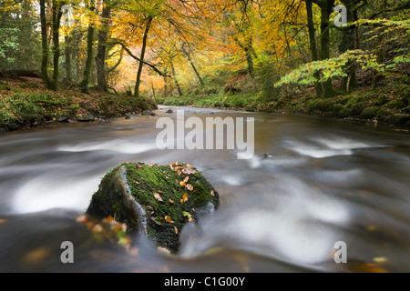 Feuillage d'automne entoure le River Teign près de Fingle Bridge, Dartmoor National Park, Devon, Angleterre. L'automne Banque D'Images