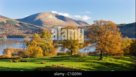 Les arbres d'automne au-dessus des rives du Derwent Water, avec Blencathra en arrière-plan, Parc National de Lake Banque D'Images