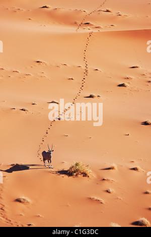 Gemsbok (Oryx gazella) dans le désert du désert namibien de l'habitat typique Banque D'Images