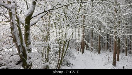 Bois recouvert de neige, scène Morchard évêque, Devon, Angleterre. Hiver (décembre) 2010. Banque D'Images