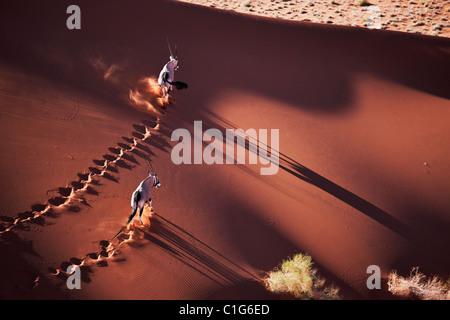 Gemsbok (Oryx gazella) dans le désert namibien typique de l'habitat des dunes de sable du désert Banque D'Images