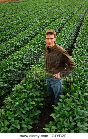 Un jeune fermier dans un champ de soja vert au milieu de l'été au centre de l'Iowa. USA. Banque D'Images