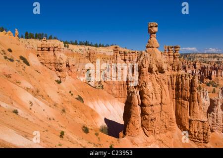Le marteau de Thor et cheminées de grès dans l'Amphithéâtre de Bryce Canyon Utah USA Etats-Unis d'Amérique US Banque D'Images