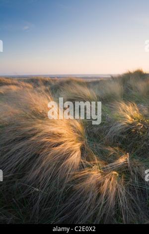 Berrow Dunes. Le Somerset. L'Angleterre. UK.