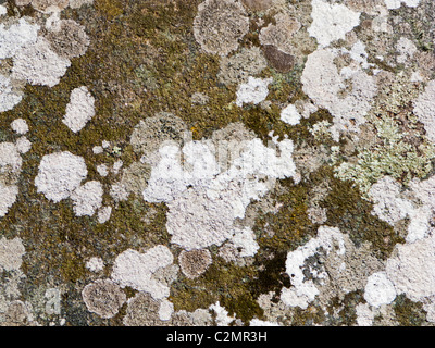 Lichens et mousses sur la pierre de granit rock close up - résumé gris texture pierre Banque D'Images