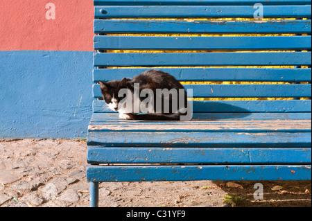 Chat sur un banc, El Caminito, la Boca, Buenos Aires, Argentine Banque D'Images