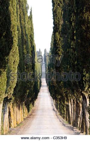 Route de cyprès,blanc,Chianti Toscane,Italie Banque D'Images