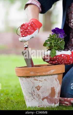 Les mains d'une femme la définition d'une fleur dans un pot.