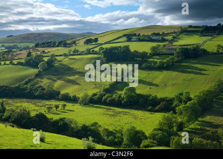 Champs d'été dans la vallée de montagnes Sperrin, Glenelly, comté Tyrone, Irlande du Nord. Banque D'Images
