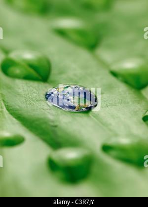 La terre en gouttes d'eau sur une feuille verte Banque D'Images