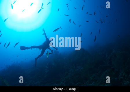 Scuba Diver et banc de poissons Banque D'Images
