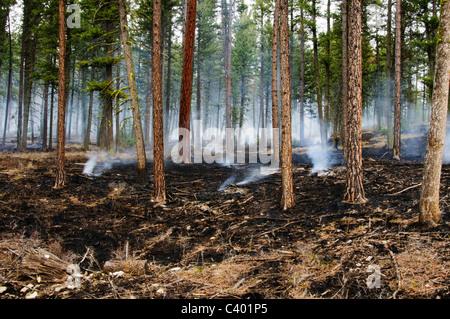 Un brûlage contrôlé dans la région du canyon de Pattee Missoula Montana a été utilisé pour enlever l'herbe séchée Banque D'Images