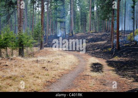 Un sentier sépare la zone de combustion contrôlée à partir d'un ara qui n'a pas brûlé dans Pattee Canyon de Missoula Banque D'Images