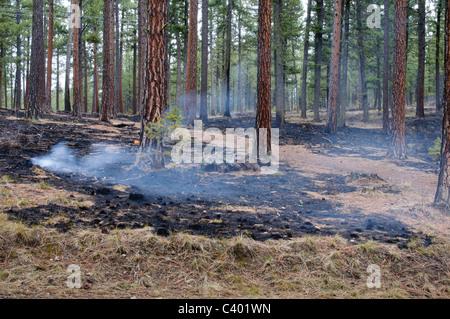 Un brûlage contrôlé encore smolders le lendemain dans Missoula Montana. Banque D'Images