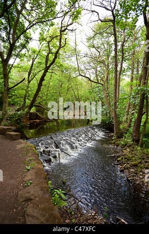 Un barrage sur la rivière Sheffield South Yorkshire UK Rivelin Banque D'Images