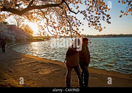 Un homme & femme marche le chemin autour du Tidal Basin à Washington DC, au coucher du soleil pendant les heures de grande floraison de fleurs de la cerise