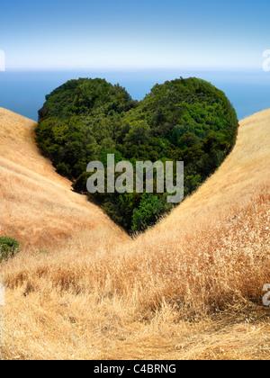 Paysage d'arbres dans la zone qui constituent la forme d'un coeur Banque D'Images