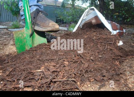 Paillis d'écorce de bois et versé d'un sac sur le jardin Banque D'Images