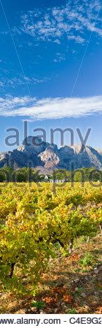 Boschendal Wine Estate au pied de la montagnes Drakenstein Groot, près de Cape Town, Afrique du Sud Banque D'Images