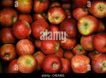 Pommes ROUGES BIOLOGIQUES Banque D'Images
