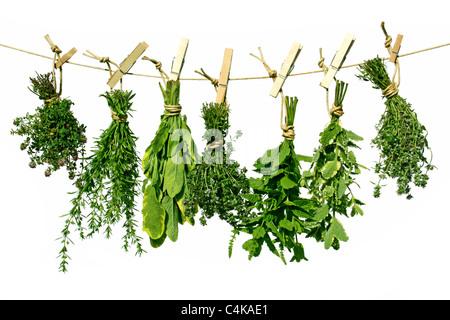Fines Herbes Banque D'Images